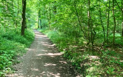 Bewegte Selbsthilfegruppe Oberwald